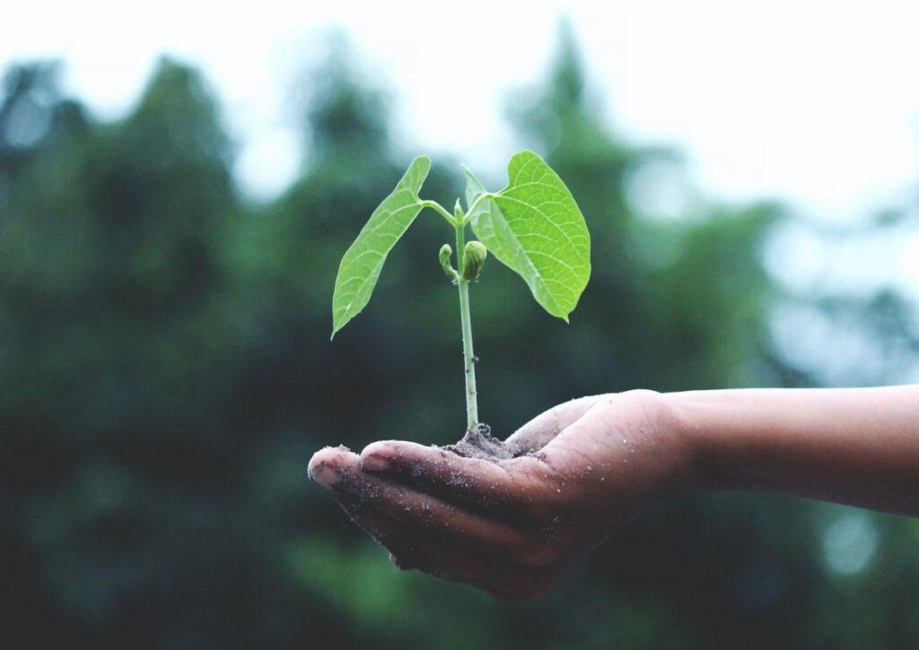 Halten eines kleinen Baumes mit etwas Erde in der Hand.